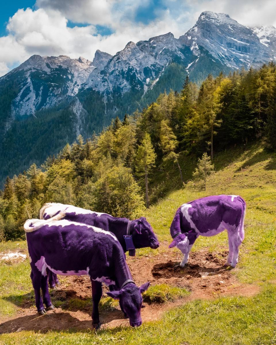 Almlandschaft mit Kühe