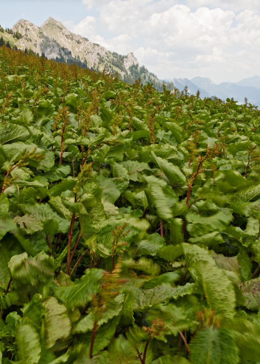 Alpen, Juni 2008